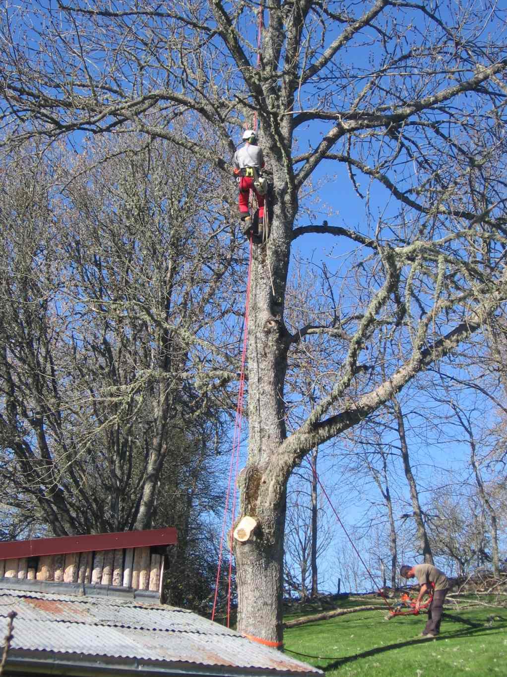 Abattage d 39 un arbre en auvergne voiron et grenoble for Reglementation elagage des arbres