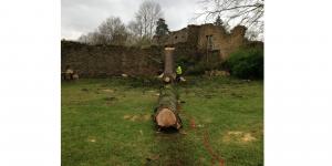 abattage cubage bois abattu