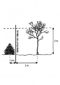 A quelle distance planter un arbre?