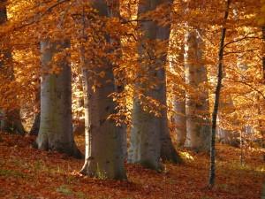 Que faire en octobre dans son jardin, la photo du mois d'octobre