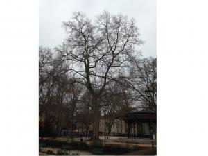 Elagage à Grenoble et Voiron