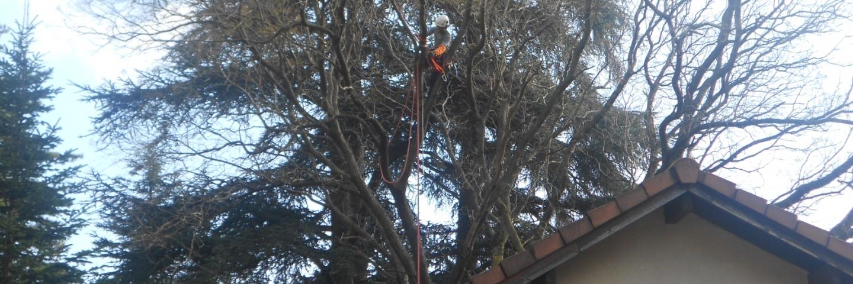 Démontage d'une branche