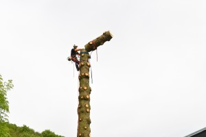 Chantier de démontage d'un épicéa de 24 mètres en rétention